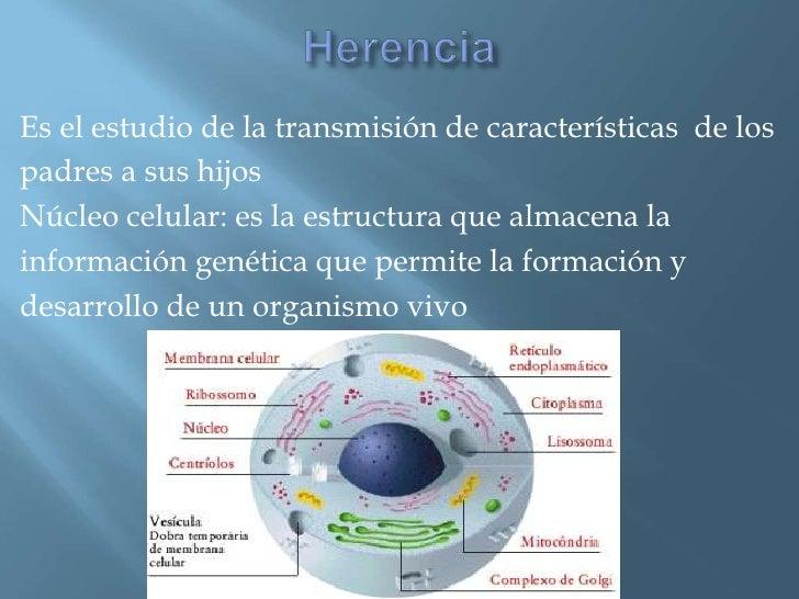 Es el estudio de la transmisión de características de lospadres a sus hijosNúcleo celular: es la estructura que almacena l...