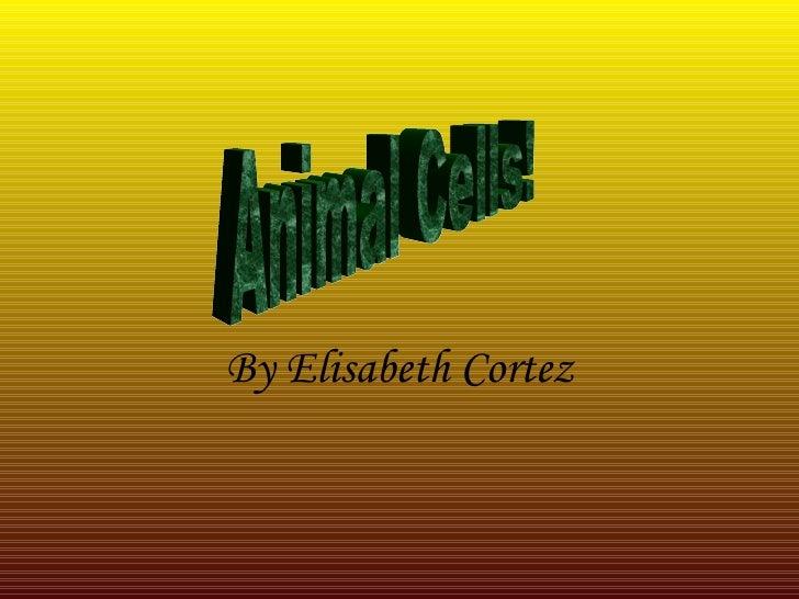 By Elisabeth Cortez Animal Cells!
