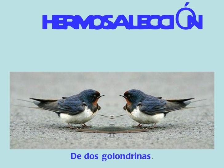 <ul><li>HERMOSA LECCIÓN </li></ul>De dos golondrinas .
