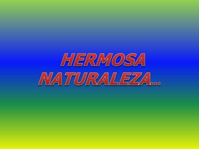 BLOG CREADO POR: CINTIA MARLENE DOMINGUEZ LA IDEA DE ESTE BLOG ES COMPARTIR PAISAJES, FOTOS, NATURALEZA DE MI HERMOSA PROV...