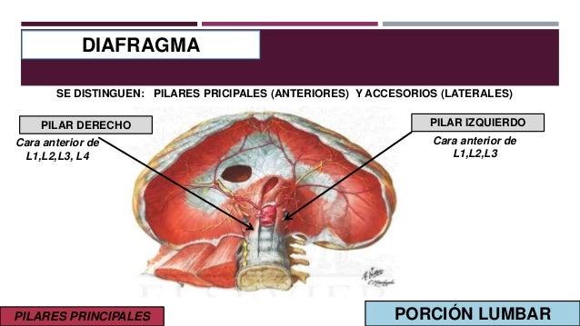 hernia diafragmatica betekenis