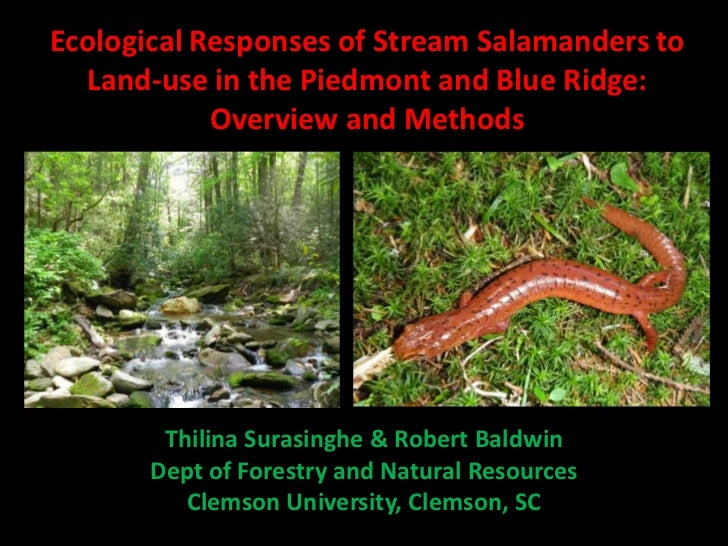 Ecological Responses of Stream Salamanders to  Land-use in the Piedmont and Blue Ridge:            Overview and Methods   ...