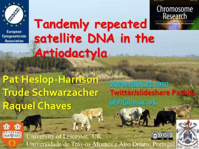 Tandemly repeated satellite DNA in the Artiodactyla Pat Heslop-Harrison Trude Schwarzacher Raquel Chaves University of Lei...