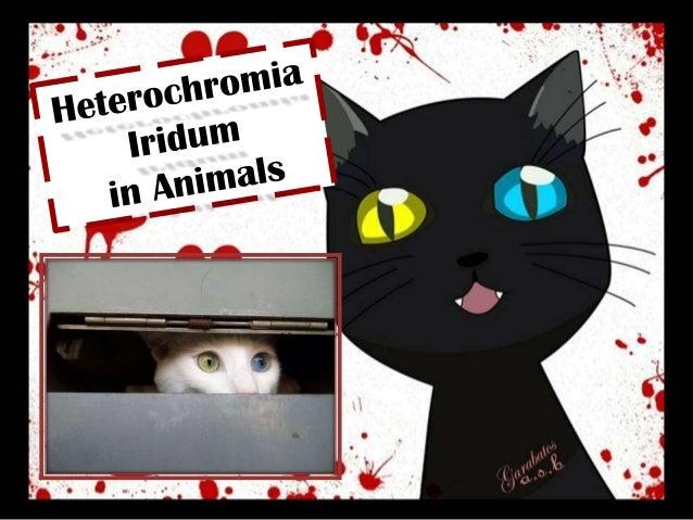 Heterochromia Iridum in Animals