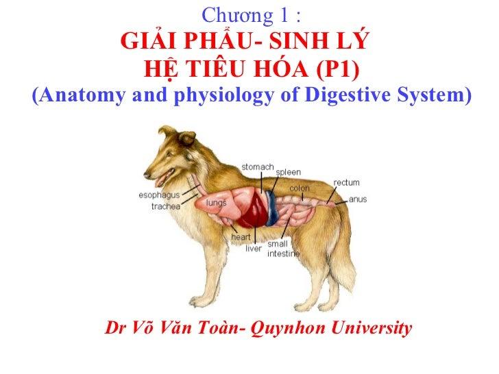 Chương 1 : GIẢI PHẨU- SINH LÝ  HỆ TIÊU HÓA (P1) (Anatomy and physiology of Digestive System) Dr Võ Văn Toàn- Quynhon Unive...