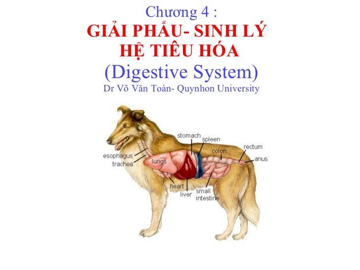 Chương 4 : GIẢI PHẨU- SINH LÝ  HỆ TIÊU HÓA  (Digestive System) Dr Võ Văn Toàn- Quynhon University