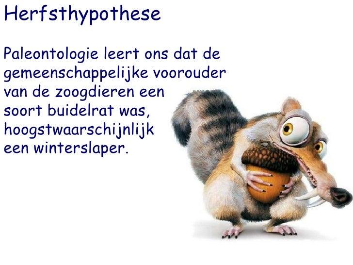 Herfsthypothese <br />Paleontologie leert ons dat de gemeenschappelijke voorouder van de zoogdieren een <br />soort buidel...