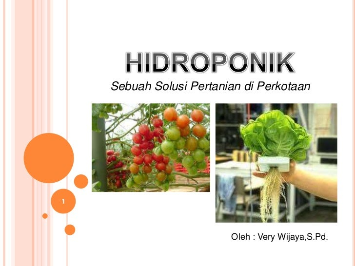 Hidroponik , solusi pertanian di perkotaan