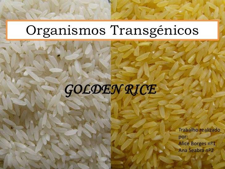 Organismos Transgénicos    GOLDEN RICE                    Trabalho realizado                    por:                    Al...