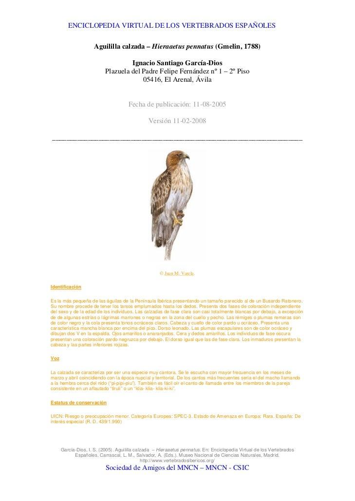 ENCICLOPEDIA VIRTUAL DE LOS VERTEBRADOS ESPAÑOLES                       Aguililla calzada – Hieraaetus pennatus (Gmelin, 1...
