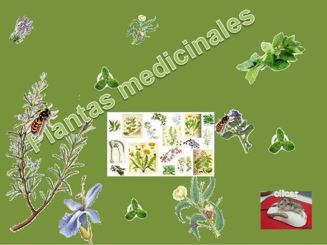 Hierbas medicinales