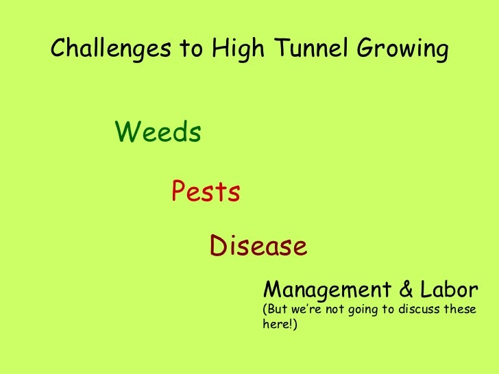 Challenges to High Tunnel Growing <ul><li>Weeds </li></ul>Pests Disease Management & Labor (But we're not going to discuss...