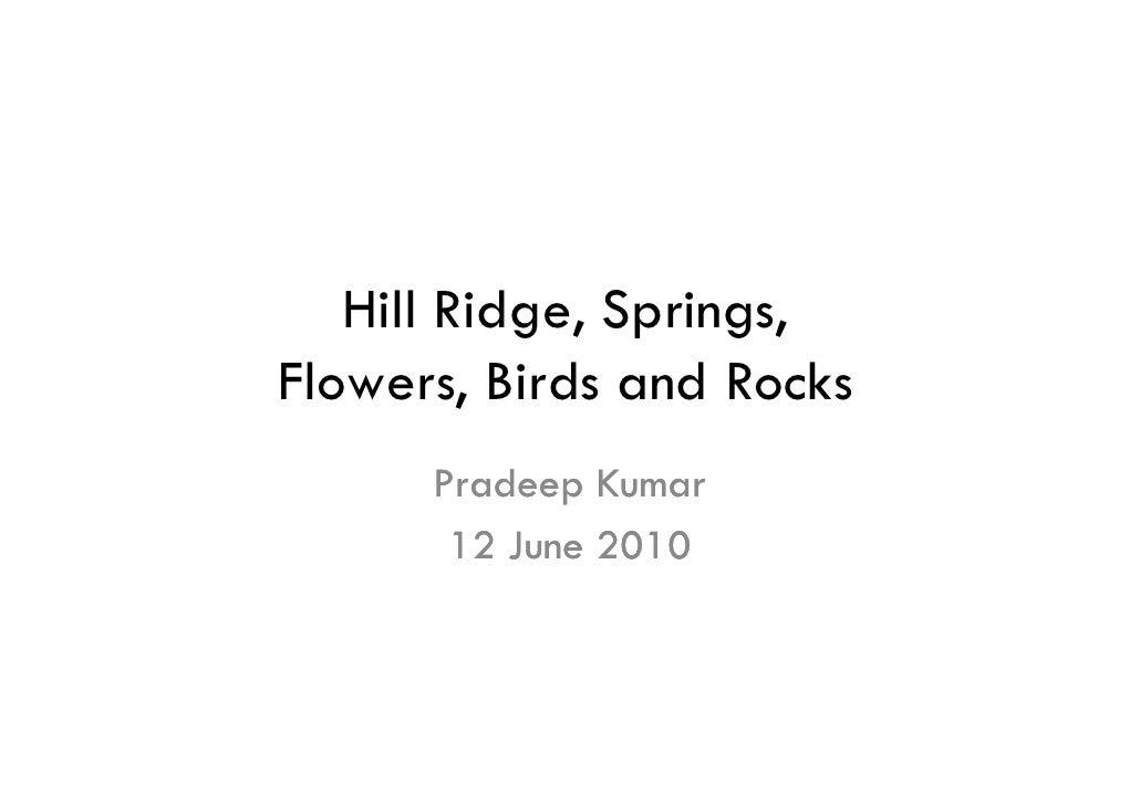Hill ridge, springs, flowers, birds and rocks