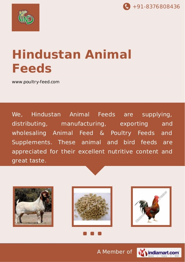 +91-8376808436  Hindustan Animal Feeds www.poultry-feed.com  We,  Hindustan  distributing, wholesaling  Animal  Feeds  man...
