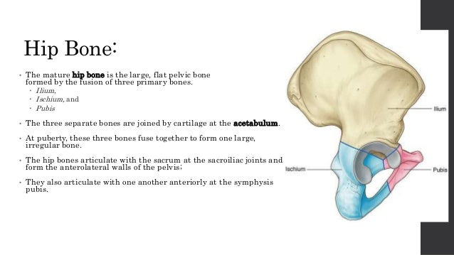 Pelvic Ring Anatomy 7509981 Togelmayafo