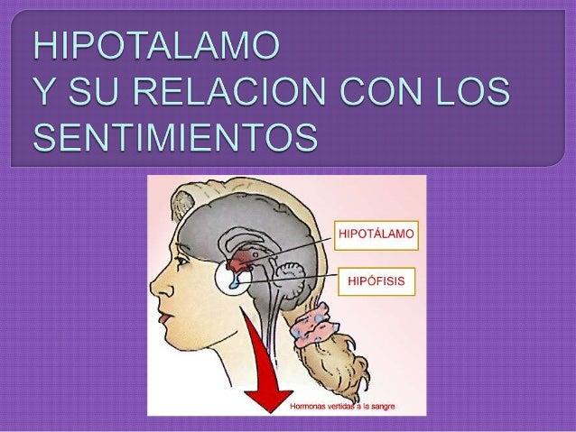  Es  una estructura nerviosa, constituye menos del 1% del volumen total del cerebro humano, ejerce efectos importantes so...