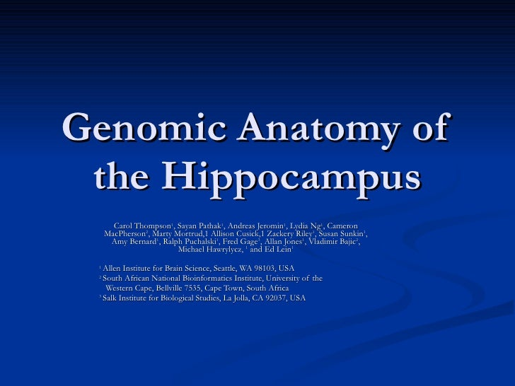 Genomic Mapping of Hippocampus