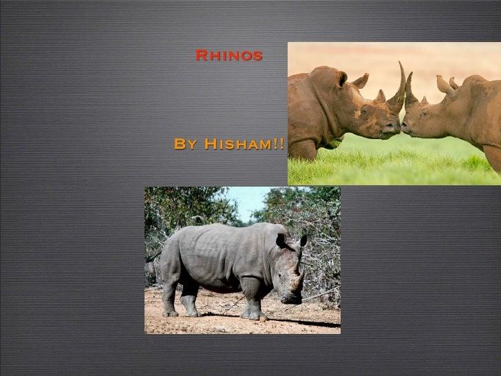 Rhinos    By Hisham!!