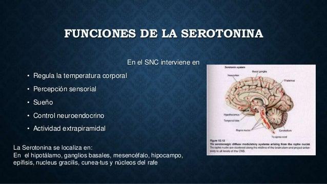 cuales son las hormonas esteroideas pdf