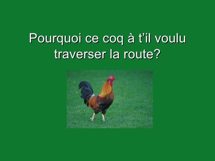 Pourquoi ce coq à t'il voulu traverser la route?