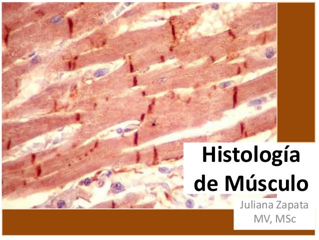 Histología de Músculo Juliana Zapata MV, MSc