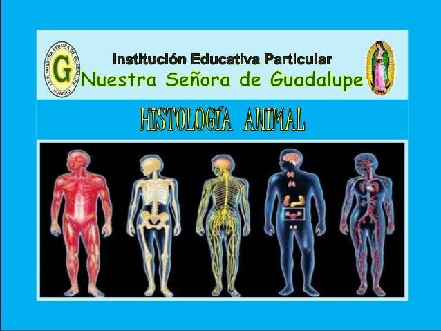 III - Unidad : Biología Tema: Histología – Parte I I.E.P «Nuestra Señora de Guadalupe» Es la ciencia que estudia todo lo r...