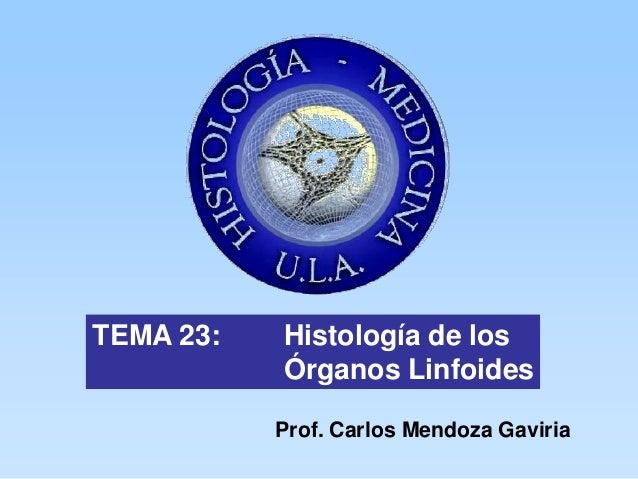 TEMA 23:   Histología de los           Órganos Linfoides           Prof. Carlos Mendoza Gaviria