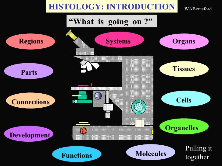 """HISTOLOGY: INTRODUCTION """" What  is  going  on ?"""" Pulling it together Regions Organs Molecules Tissues Connections Cells Pa..."""