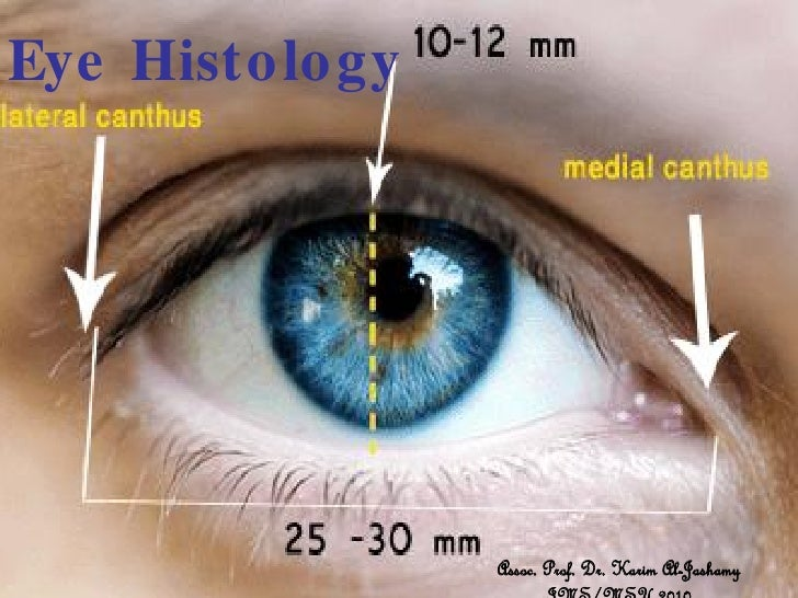 Histology of eye