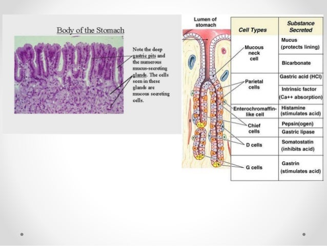 Histology - Tissues Notes Epithelial Tissue Powerpoint Presentation