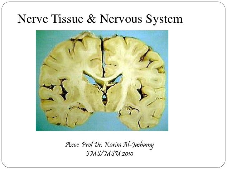 nervous system and nervous tissue Identify and understand the connective tissue elements of the central and  peripheral nervous systems 4 distinguish between specific organs/structures in  the.