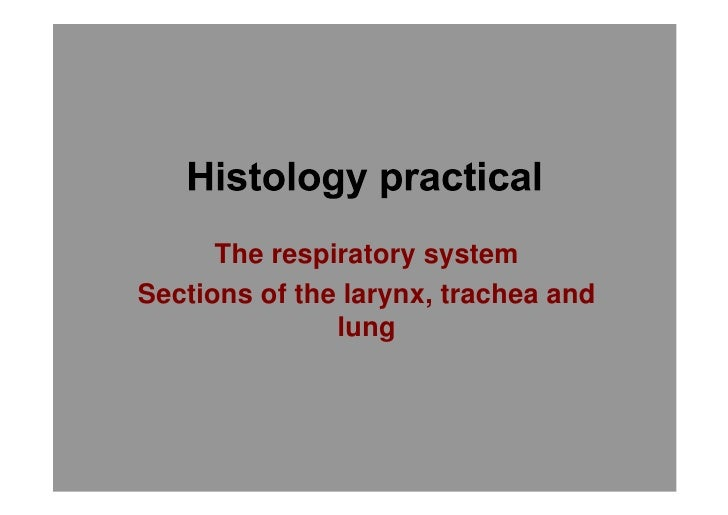 Histology of respiratory system larynx trache and lung