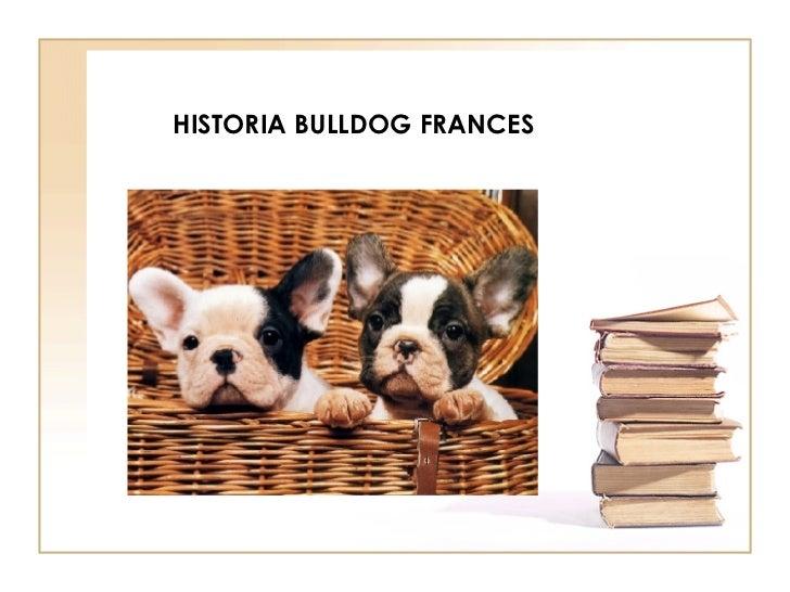 HISTORIA BULLDOG FRANCES