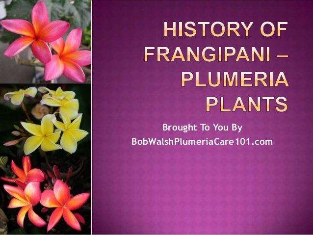 History of Frangipani Plumeria Plants