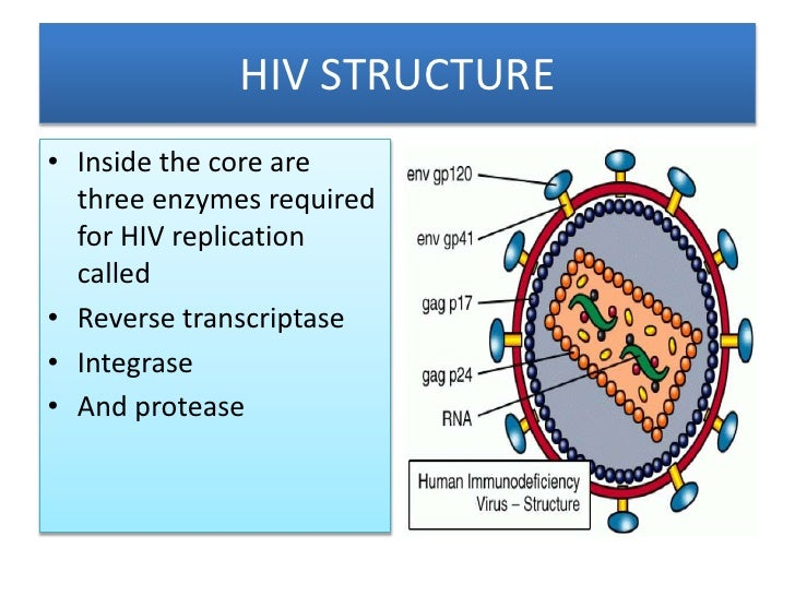The HIV Life Cycle - TheBody.com
