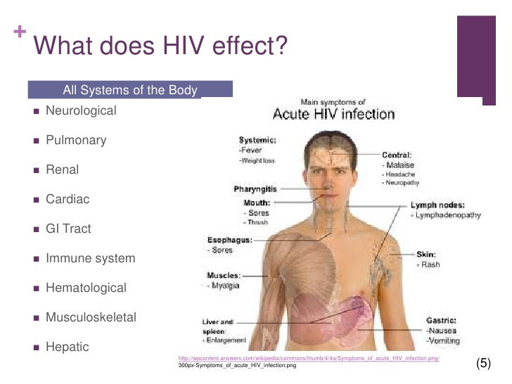a research on the effects of hiv mutations on the immune system In the effects of depression on immune system reactivity in hiv the research on pni, hiv that the pni paradigm as well as the research does.