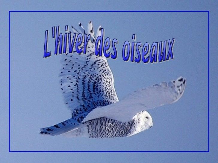 Avez-vous reconnu l'oiseau sur la première   page? C'est le magnifique harfang des neiges,   l'emblème aviaire du Québec. ...