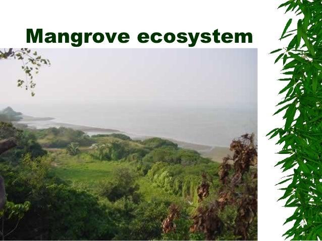 Hk mangrove ecosystem