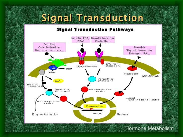 steroid hormones are examples of signal transduction using
