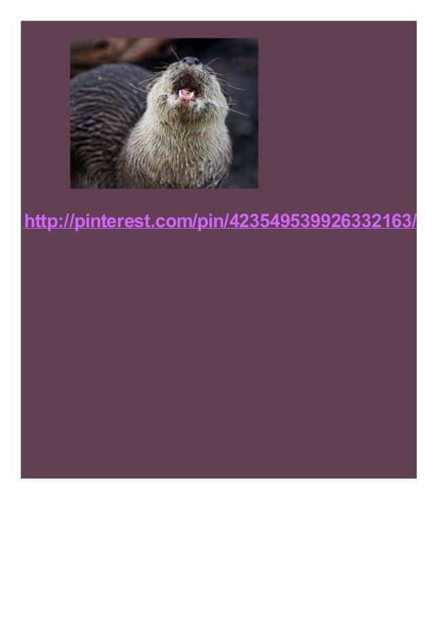 http://pinterest.com/pin/423549539926332163/
