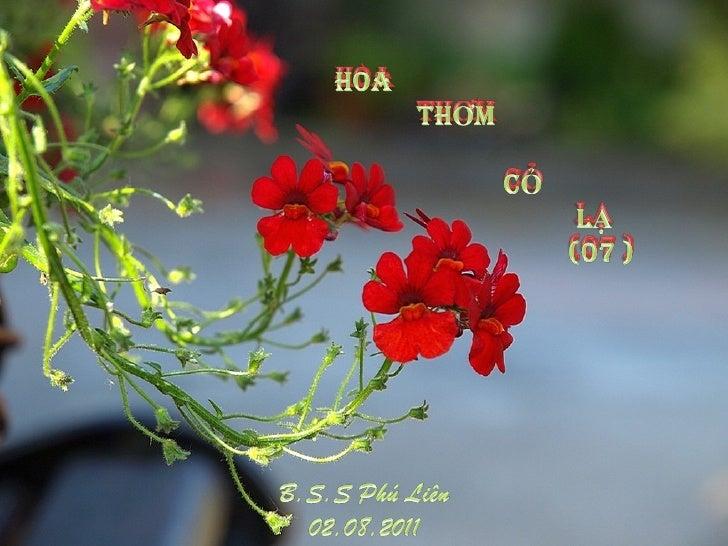 HoaHOA THƠM           THƠm  CỎ LẠ   (07)                   cỎ                 LẠ                 (07 )