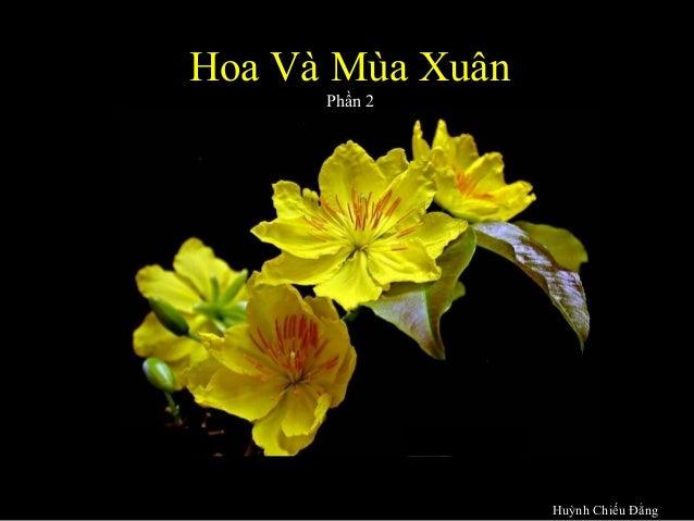 Hoa và mùa xuân  phần II