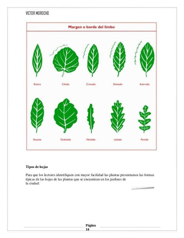 Las Hojas de Las Plantas