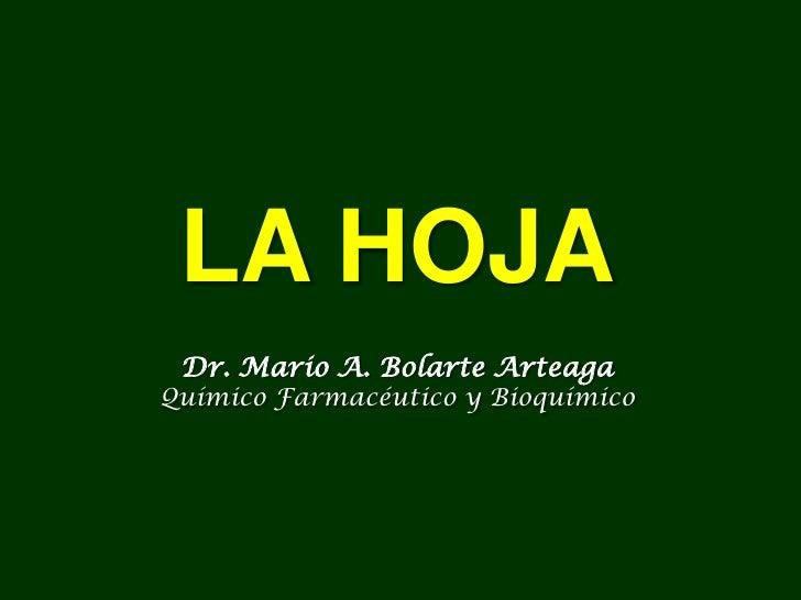 LA HOJA Dr. Mario A. Bolarte ArteagaQuímico Farmacéutico y Bioquímico