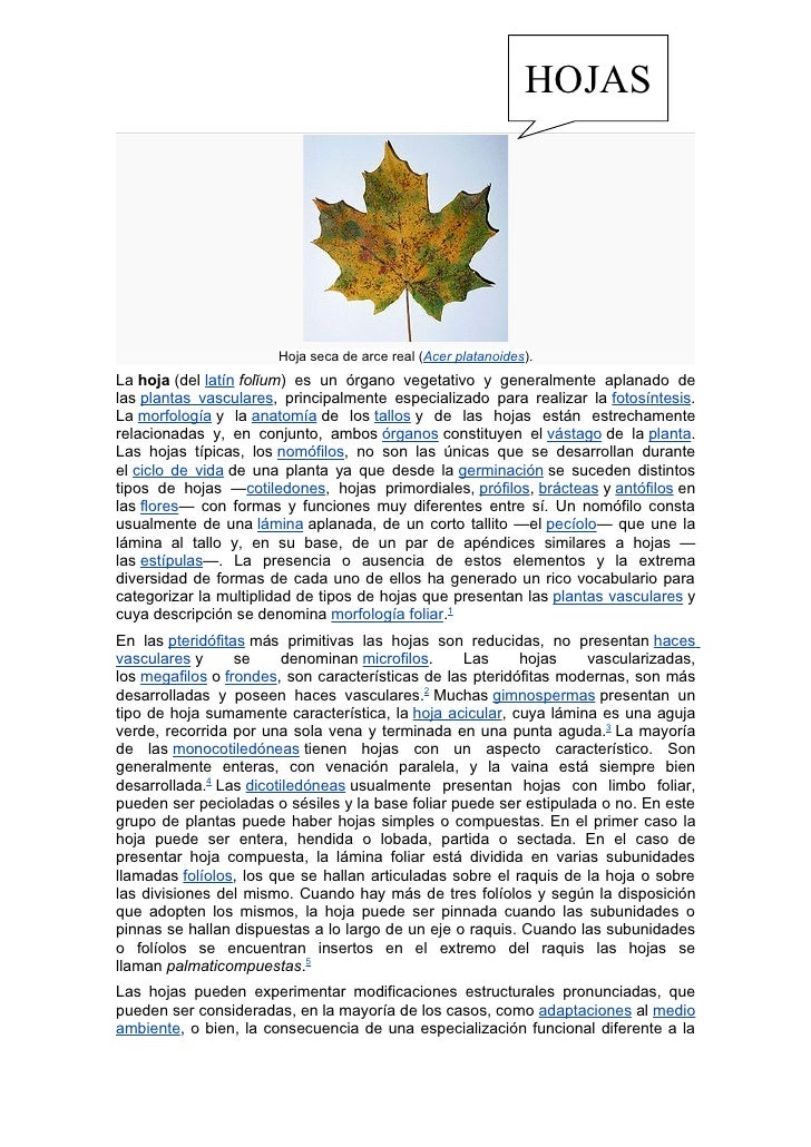 HOJAS                       Hoja seca de arce real (Acer platanoides).La hoja (del latín folĭum) es un órgano vegetativo y...