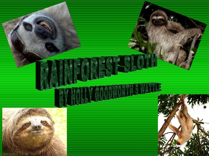 RAINFOREST SLOTH BY HOLLY GOODWORTH 5 WATTLE