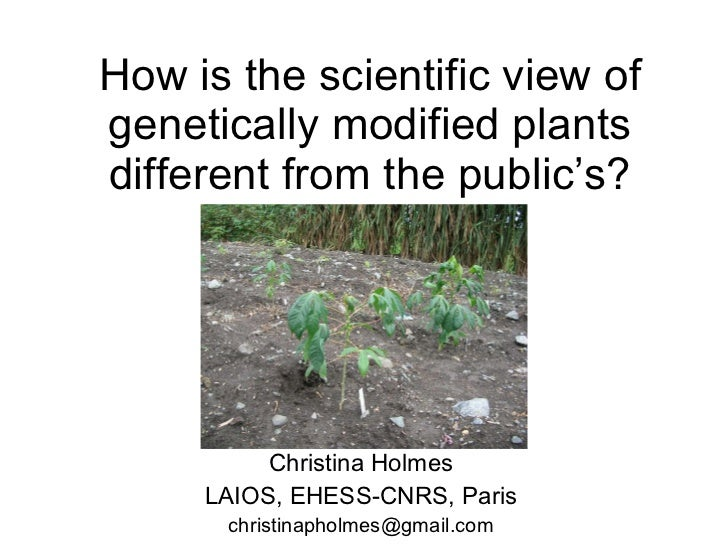 How is the scientific view of genetically modified plants different from the public's?