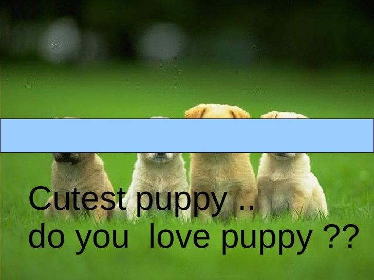 Cutest puppy ..  do you  love puppy ??