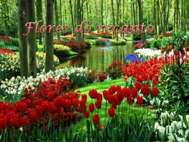 Amarília Flores do recanto
