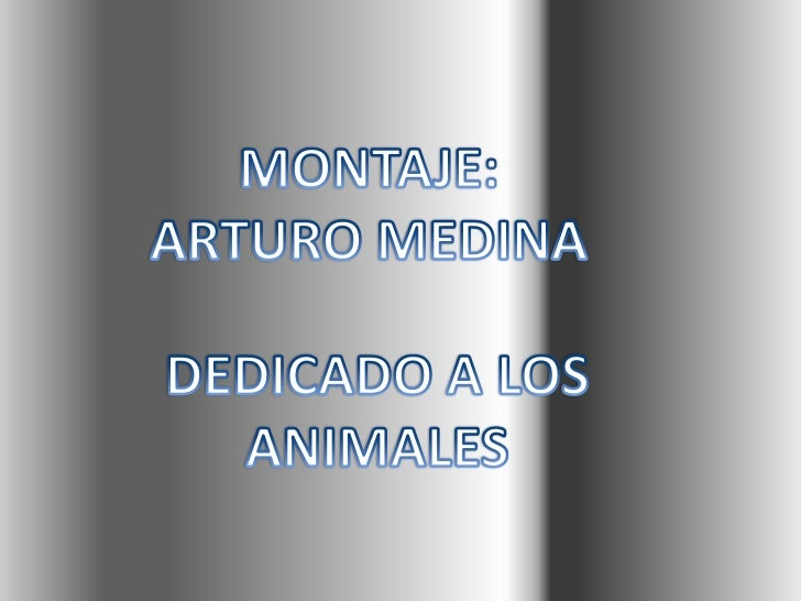 Homenaje al reino animal